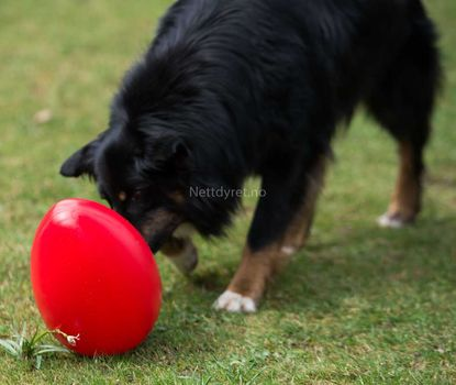 Ball Egg X-Strong red 30cm -Hund (56-P2-red)