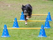 Agility-Modul Stang/ stolpe 1m Agilityhinder (56-A13)