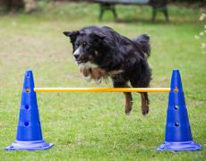 Agility-Modul Stang/stolpe 1m Agilityhinder