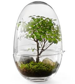 Design House Stockholm Grow Minidrivhus XL H32