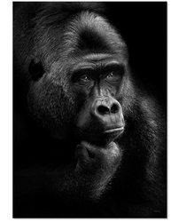 ChiCura Poster Gorilla Thoughts 50x70