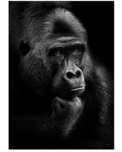 ChiCura Poster Gorilla Thoughts 50x70 (537-CP-1032-5070)