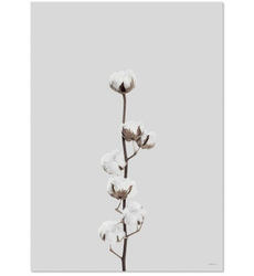 ChiCura Poster Cotton Flower 50x70