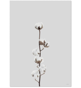 ChiCura Poster Cotton Flower 50x70 (537-CP-1131-5070)