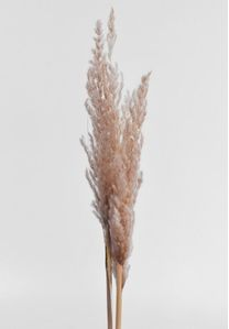 by Nature Eryanthus Pampas Sart-Rosa 10stk (555-06055-109)